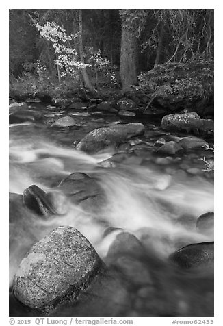 North St Vrain Creek in autumn. Rocky Mountain National Park (black and white)