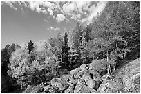 Brightly colored aspens and boulders in autumn. Rocky Mountain National Park ( black and white)