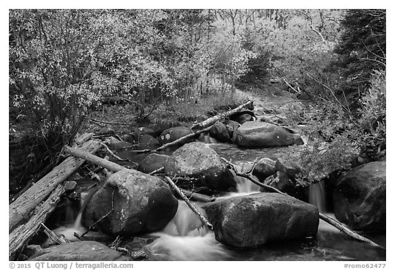 Stream above Alberta Falls in autumn. Rocky Mountain National Park (black and white)