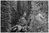 Stream flowing in forested gorge. Rocky Mountain National Park ( black and white)