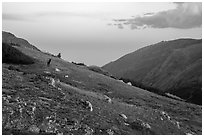 Alpine tundra at sunset with Elk. Rocky Mountain National Park ( black and white)