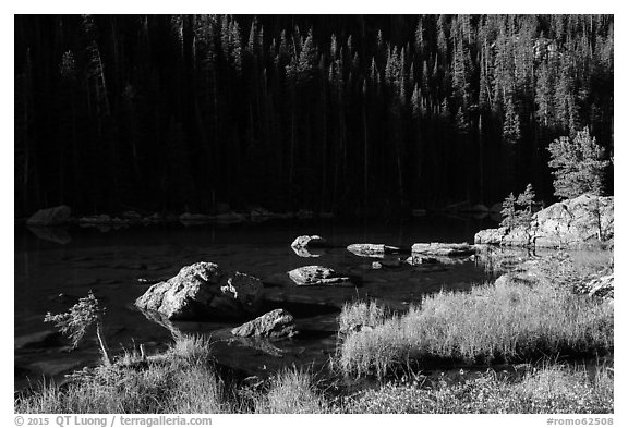 Grasses, boulders, lakeshore, Dream Lake. Rocky Mountain National Park (black and white)