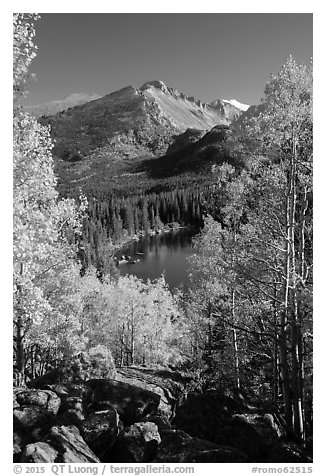 Yellow and orange aspens framing Bear Lake and Longs Peak. Rocky Mountain National Park (black and white)