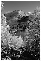 Yellow and orange aspens framing Bear Lake and Longs Peak. Rocky Mountain National Park ( black and white)