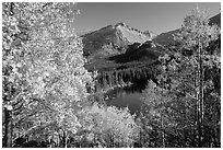 Autumn foliage above Bear Lake. Rocky Mountain National Park ( black and white)