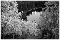 Aspen in autumn foliage and Bear Lake. Rocky Mountain National Park ( black and white)