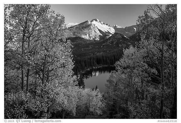 Longs Peak rising above Bear Lake and aspens in autumn foliage. Rocky Mountain National Park (black and white)