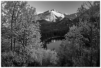 Longs Peak rising above Bear Lake and aspens in autumn foliage. Rocky Mountain National Park ( black and white)