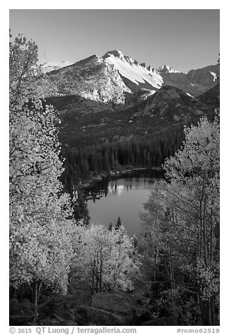 Longs Peaks, Bear Lake, yellow and orange aspens. Rocky Mountain National Park (black and white)