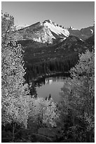 Longs Peaks, Bear Lake, yellow and orange aspens. Rocky Mountain National Park ( black and white)