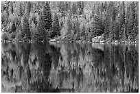 Autumn foliage color and reflections in Bear Lake. Rocky Mountain National Park ( black and white)