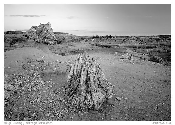Pedestal petrified log and petrified stump sunset,. Theodore Roosevelt  National Park (black and white)