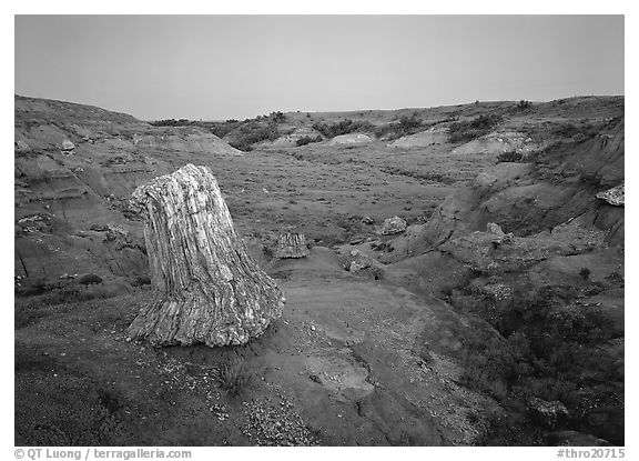 Petrified log stump at dusk, South Unit. Theodore Roosevelt  National Park (black and white)