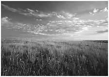 Tall grass prairie and wildflowers, South Unit, late afternoon. Theodore Roosevelt National Park ( black and white)