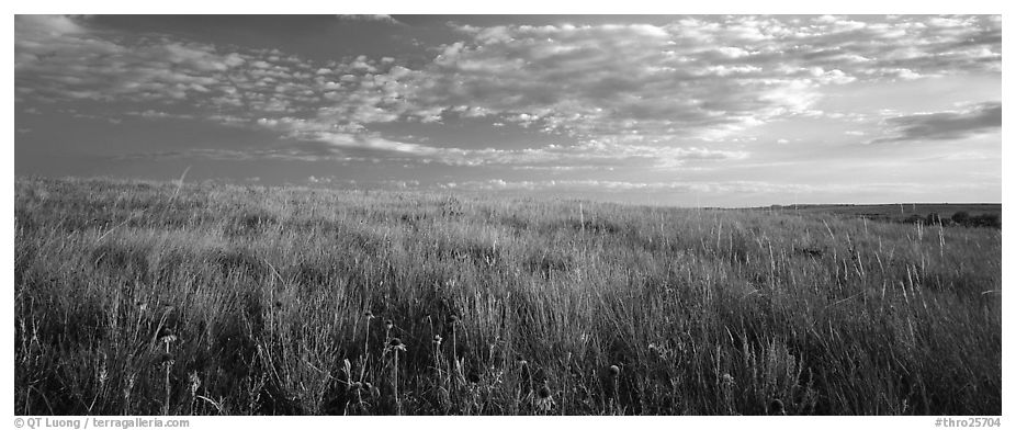 Tall grass prairie landscape, South Unit. Theodore Roosevelt National Park (black and white)