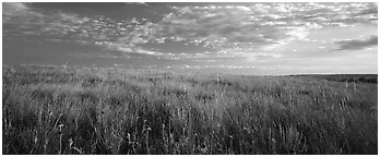 Tall grass prairie landscape. Theodore Roosevelt  National Park (Panoramic black and white)
