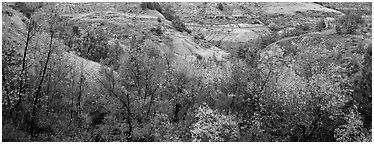 Badlands landscape in autumn. Theodore Roosevelt  National Park (Panoramic black and white)