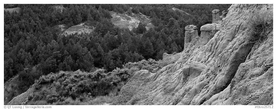 Badlands, caprock chimneys, and forest. Theodore Roosevelt National Park (black and white)