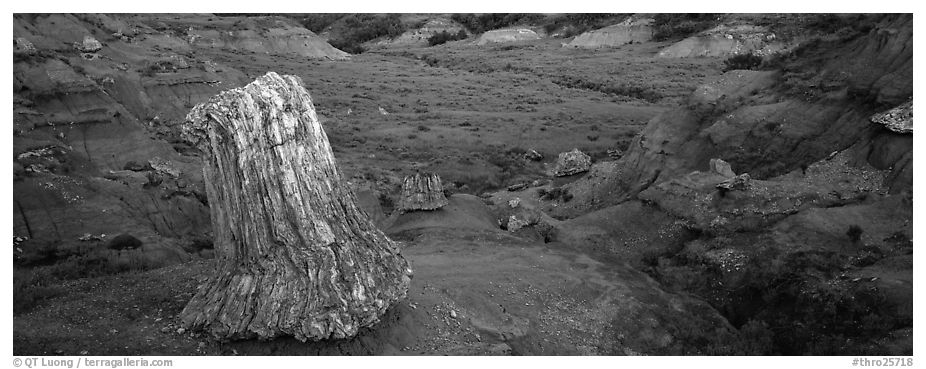 Petrified stump. Theodore Roosevelt National Park (black and white)