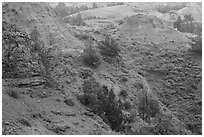 Red soil, Scoria Point. Theodore Roosevelt National Park, North Dakota, USA. (black and white)