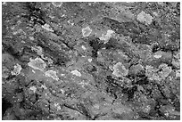 Close-up of red rocks with lichen. Theodore Roosevelt National Park ( black and white)