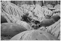 Cannonball concretions on badland folds. Theodore Roosevelt National Park, North Dakota, USA. (black and white)
