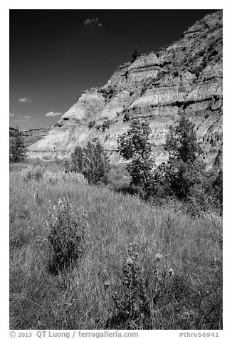 Summer wildflowers and badlands. Theodore Roosevelt National Park (black and white)