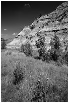 Summer wildflowers and badlands. Theodore Roosevelt National Park, North Dakota, USA. (black and white)