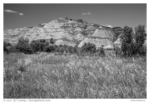 Summer prairie and badlands. Theodore Roosevelt National Park (black and white)