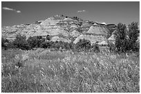 Summer prairie and badlands. Theodore Roosevelt National Park, North Dakota, USA. (black and white)