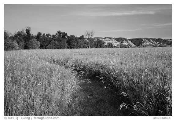 Overgrown trail in late afternoon, Elkhorn Ranch Unit. Theodore Roosevelt National Park (black and white)