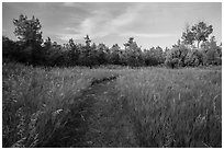 Grassy trail, Elkhorn Ranch Unit. Theodore Roosevelt National Park, North Dakota, USA. (black and white)