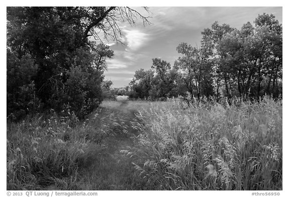 Trail, tall grasses, and cottonwoods, Elkhorn Ranch Unit. Theodore Roosevelt National Park (black and white)