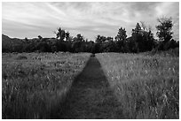 Trail through grasses, Elkhorn Ranch Unit. Theodore Roosevelt National Park, North Dakota, USA. (black and white)