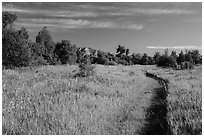 Trail through meadow, cottowoods and distant badlands, Elkhorn Ranch Unit. Theodore Roosevelt National Park, North Dakota, USA. (black and white)