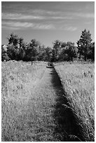 Grassy trail, early morning, Elkhorn Ranch Unit. Theodore Roosevelt National Park, North Dakota, USA. (black and white)