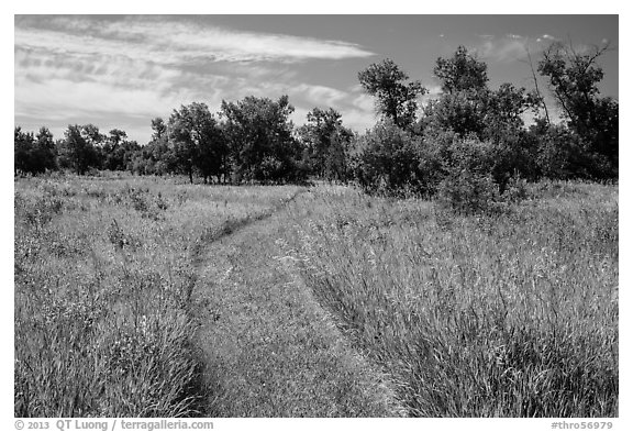 Trail overgrown with grasses, Elkhorn Ranch Unit. Theodore Roosevelt National Park (black and white)
