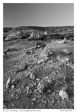 Pieces of petrified wood scattered, sunset. Theodore Roosevelt National Park (black and white)