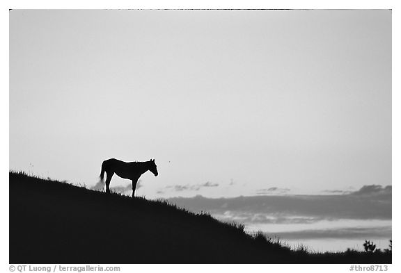 Wild horse silhouetted at sunset, South Unit. Theodore Roosevelt National Park (black and white)
