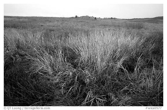 Tall grass prairie in fall. Wind Cave National Park (black and white)