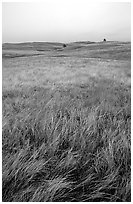 Tall grass prairie. Wind Cave National Park ( black and white)