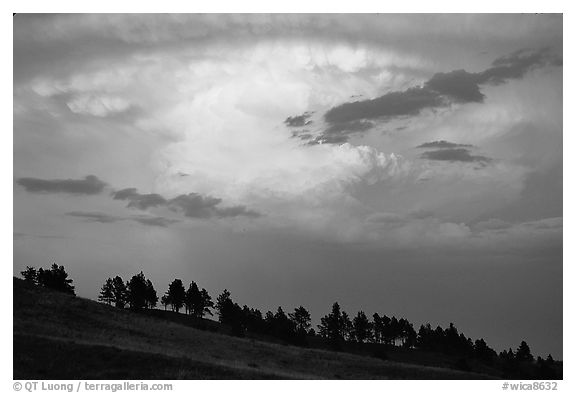 Row of trees under a storm cloud at sunset. Wind Cave National Park (black and white)