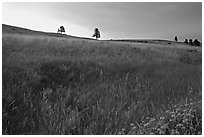 Tall grass and hills at Bison Flats, sunrise. Wind Cave National Park ( black and white)