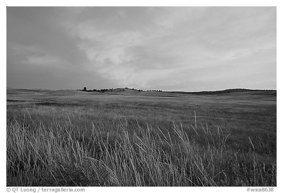 Tall grasses and pink cloud, sunrise. Wind Cave National Park (black and white)