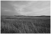 Tall grasses and pink cloud, sunrise. Wind Cave National Park ( black and white)