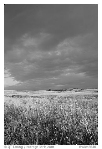 Prairie with tall grasses and dark sky, early morning. Wind Cave National Park (black and white)