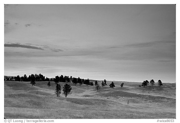 Rolling hills covered with scattered pines, dusk. Wind Cave National Park (black and white)