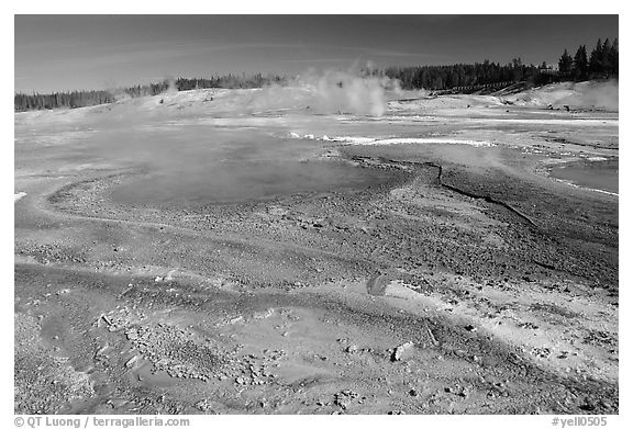 Green and red algaes in Norris geyser basin. Yellowstone National Park (black and white)
