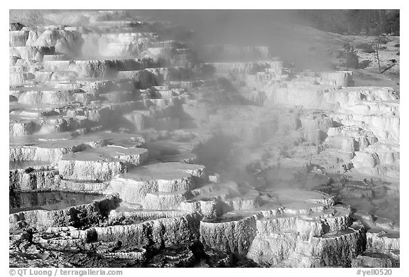 Minerva travertine terraces at Mammoth Hot Springs. Yellowstone National Park (black and white)