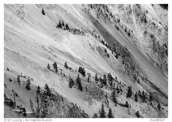Trees and colorful mineral deposits, Grand Canyon of Yellowstone. Yellowstone National Park (black and white)